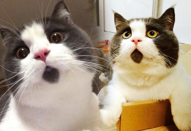 Foto Kucing Lucu Imut dan Menggemaskan 32