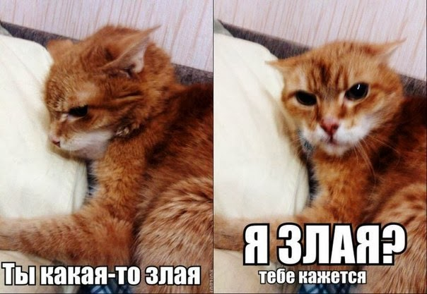 как можно вывести у кошки глистов дома