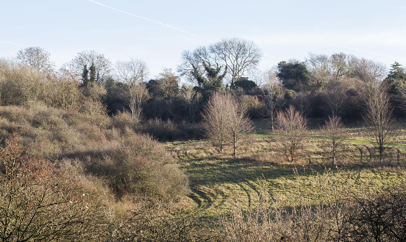 New Hill, 20 December 2013.
