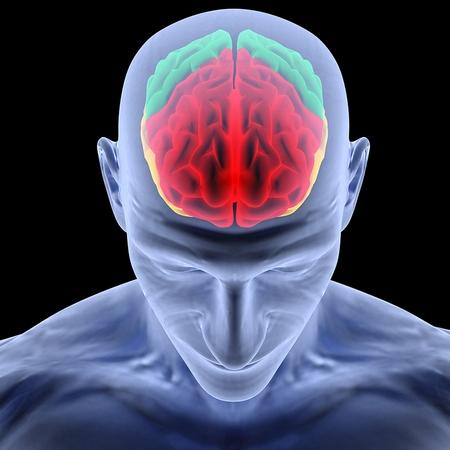 Datos curiosos sobre el cerebro