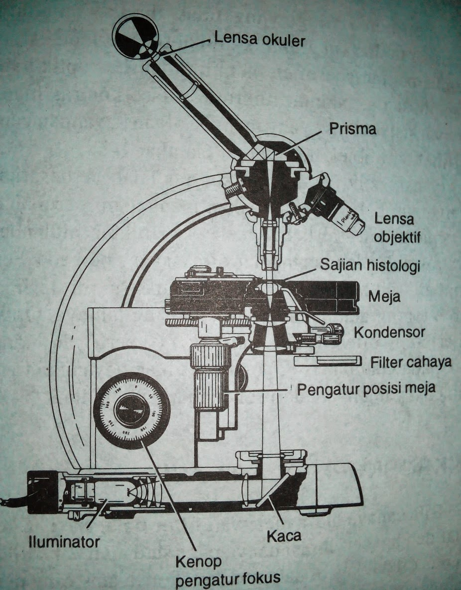 parts of light microscope