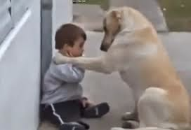 Loving dog takes care of little boy with Down syndrome