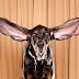 ¿Es verdad que los perros escuchan mejor que los humanos?