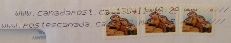 marmotte nordamericane
