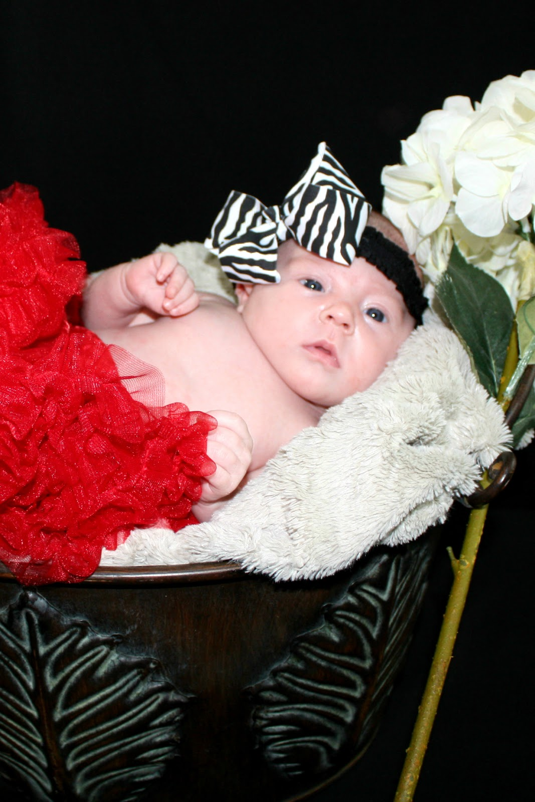 Beauty101bylisa Diy At Home Professional Newborn Photo Shoot
