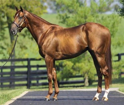 Liver Chestnut Horses picture 2