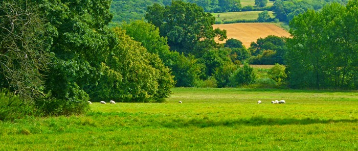 Pastoral idyll, Wiltshire