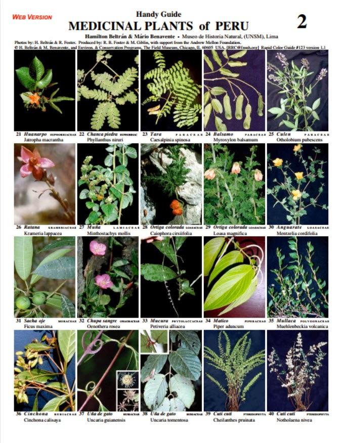Travelmarx resources for understanding the plants of peru for Plantas ornamentales del peru