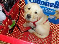 Shopping trip to Target