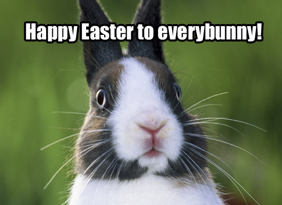 cute easter bunny pics. more cute Easter Bunnies?