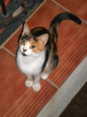 perseverancia de la gatita MariPili