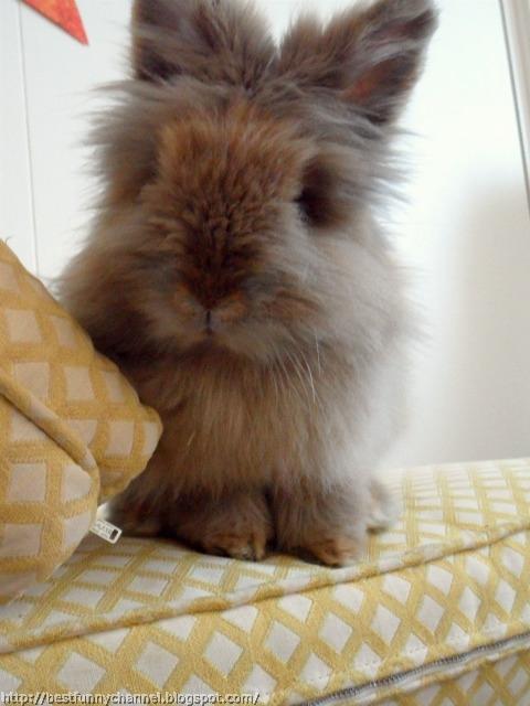 Gray fluffy bunny.