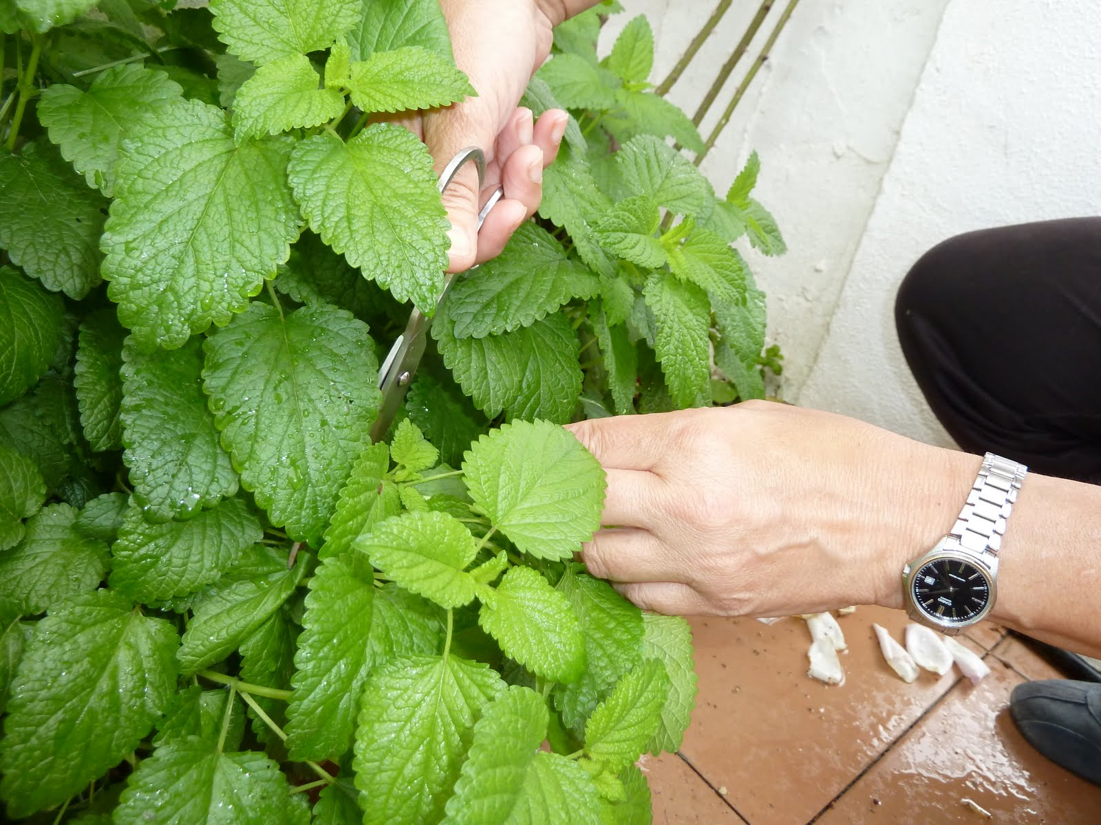 Estudio sobre el jab n resultados de las pruebas for Salsa de hierba luisa