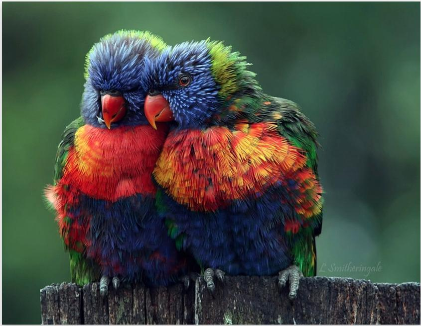 Foto Burung Unik
