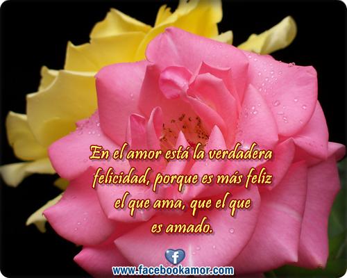 Frases con imagenes de flores y rosas para el amor - YouTube