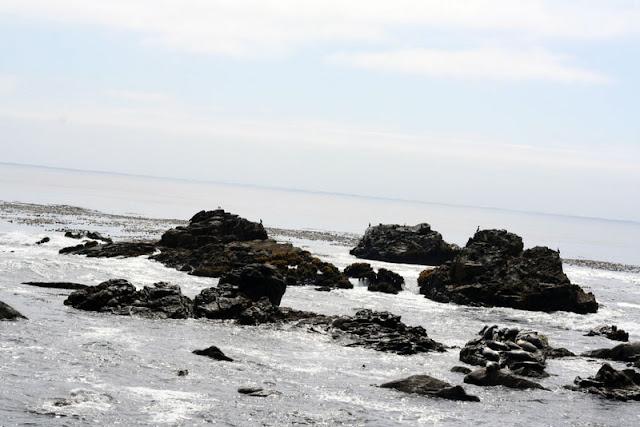 seals sea lions Salt Point State Park