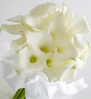 pretty Calla lilies flowers