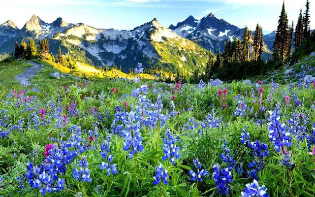 Foto met bloemen, bergen en bomen in de lente