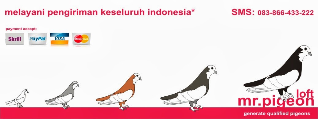 Mr.Pigeon Indonesia