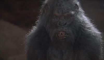 evil white albino gorilla in congo 1995