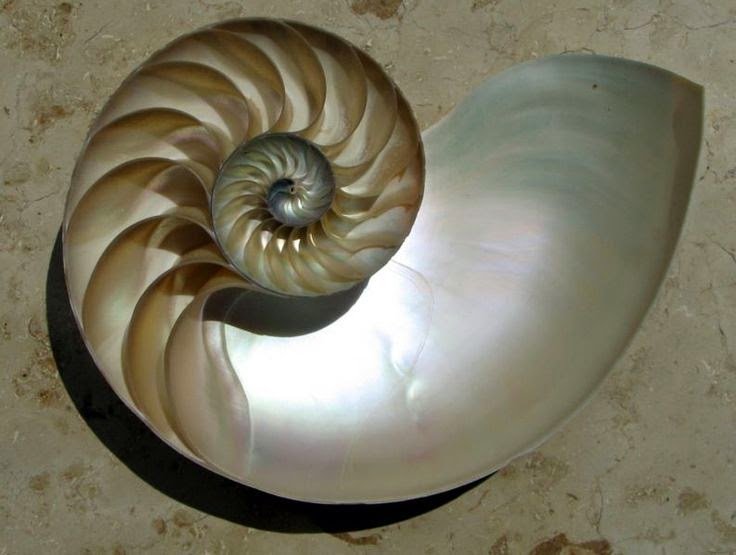 proporcion dorada golden ratio