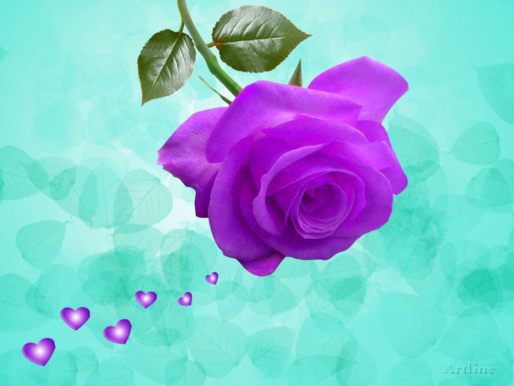 Light Purple Rose Wallpaper The Rose Purple is Light