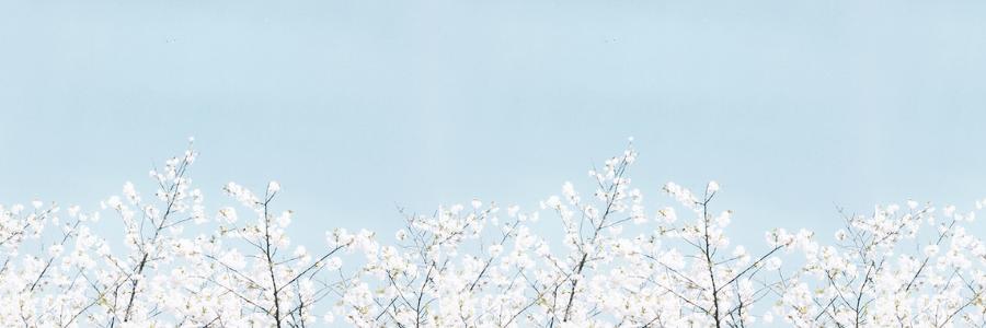 flower--