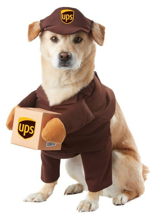 Funny Small And Large Dog Halloween Costumes Ideas 2018 ~ Happy