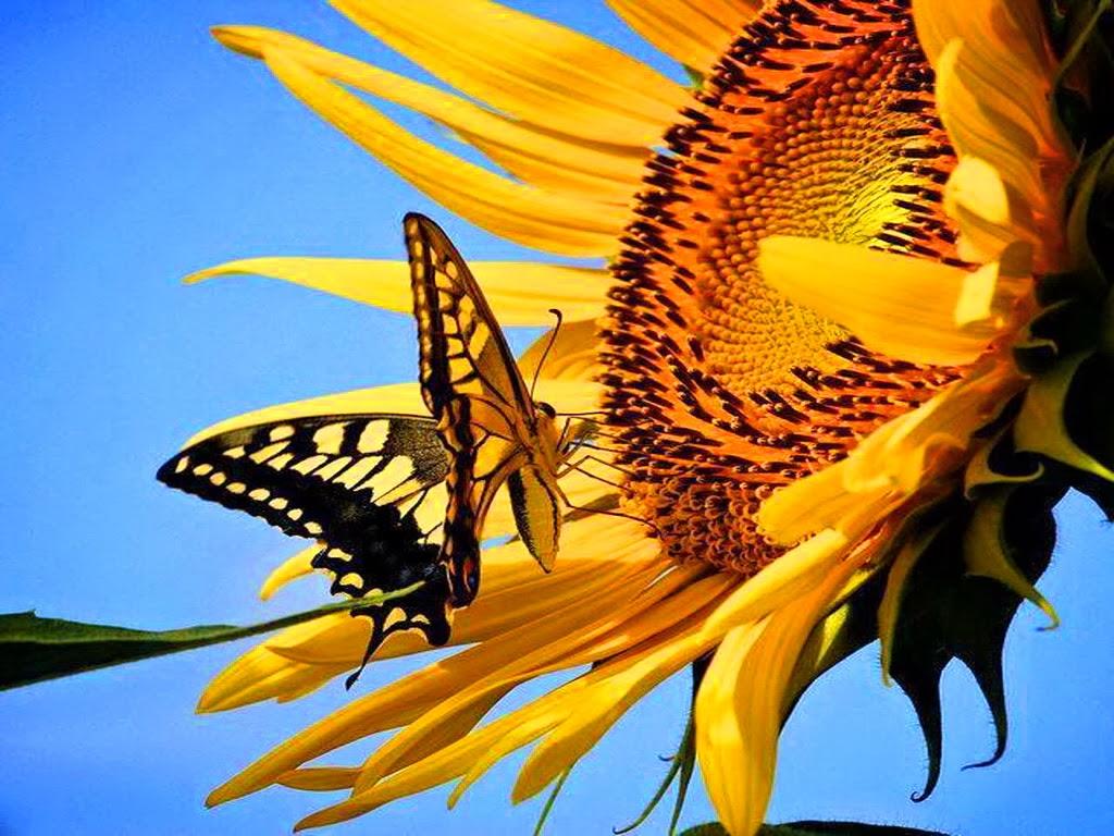 """<img src=""""http://2.bp.blogspot.com/-0Es4g7qIYCo/UtrsO4nYKXI/AAAAAAAAI64/Gd4VyXaeul0/s1600/sunny-morn-for-annie.jpeg"""" alt=""""sunny morn for annie"""" />"""