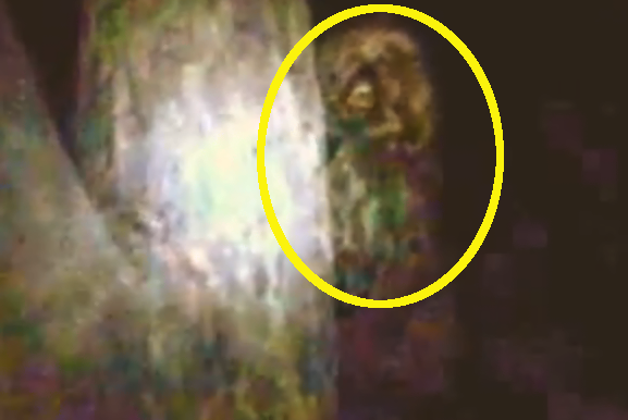 video of a yowie