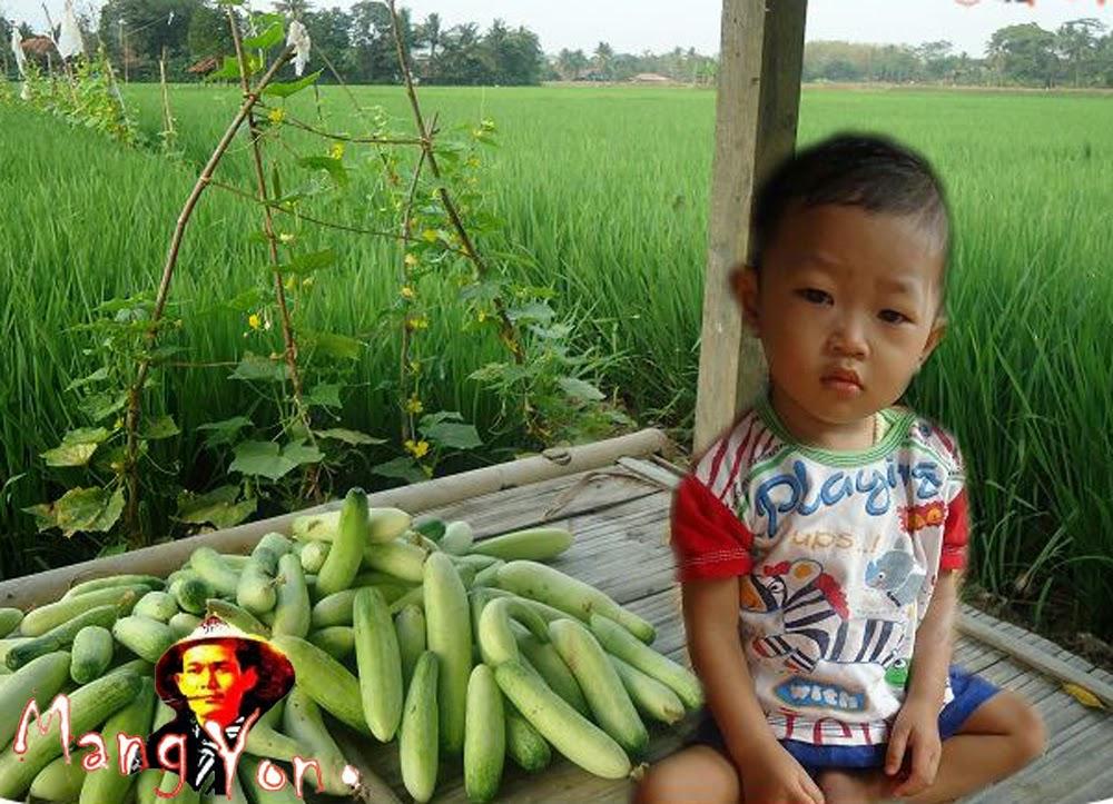 Mentimun ( Bonteng ) adalah buah sayuran atau buah lalapan