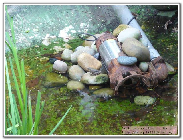 青蛙呱呱在水池