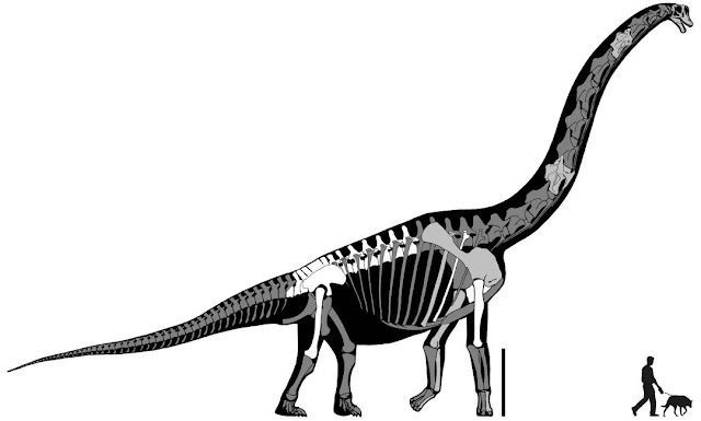 Brachiosaurus: el dinosaurio mas alto