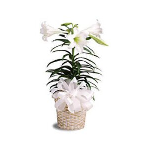 Send an Easter Lily