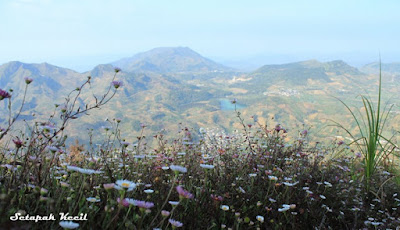 Taman Daisy di Gunung Prau Dieng