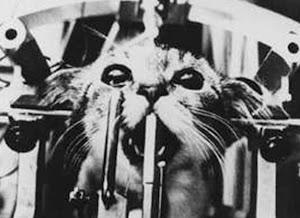 Figura 9. Gato em Equipamento de Contenção para Experimentação