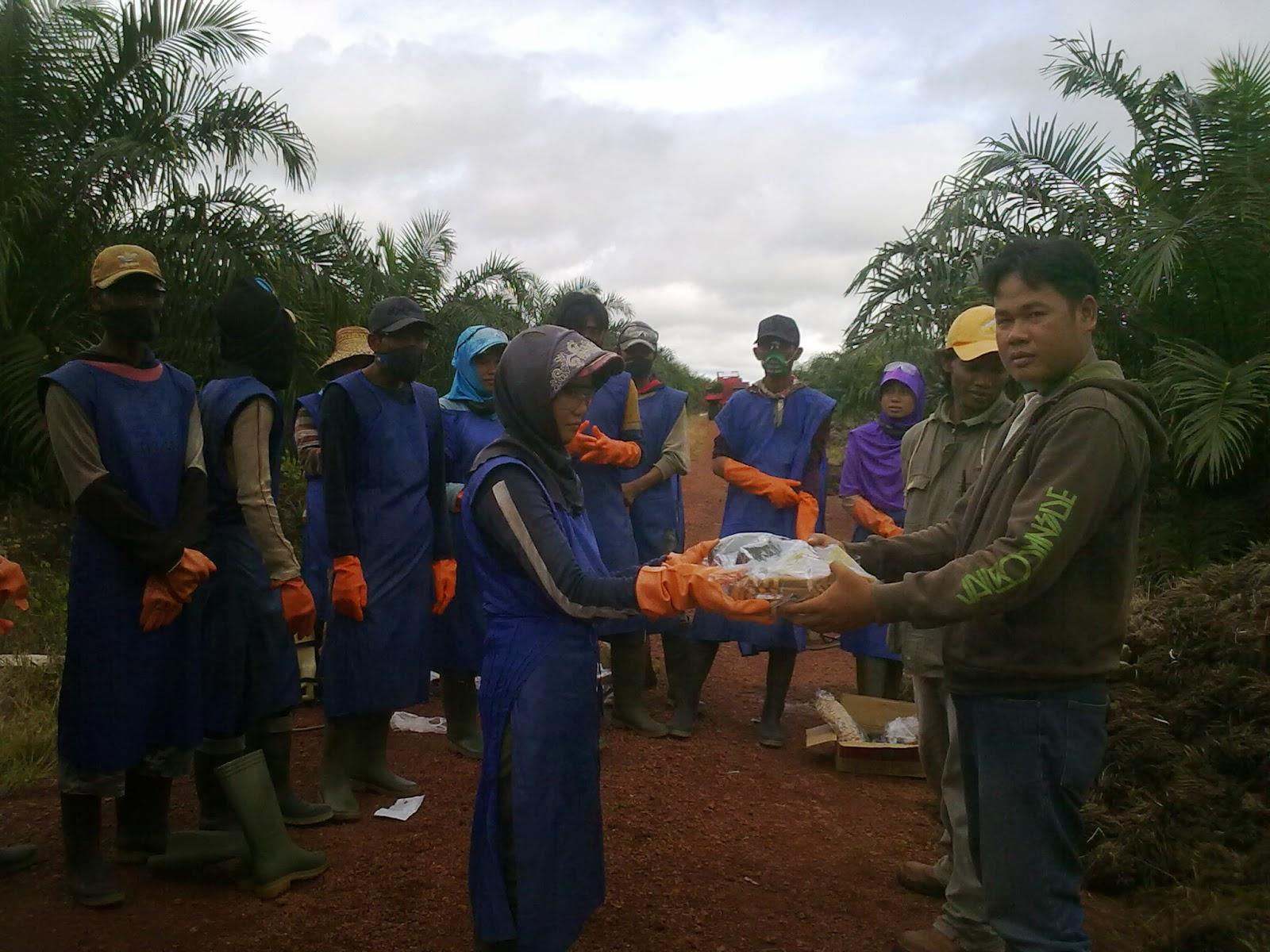 Metode & Teknis Pengendalian Gulma di Perkebunan Kelapa Sawit