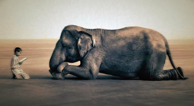 The Elephant in the Room  Elephant+in+the+room