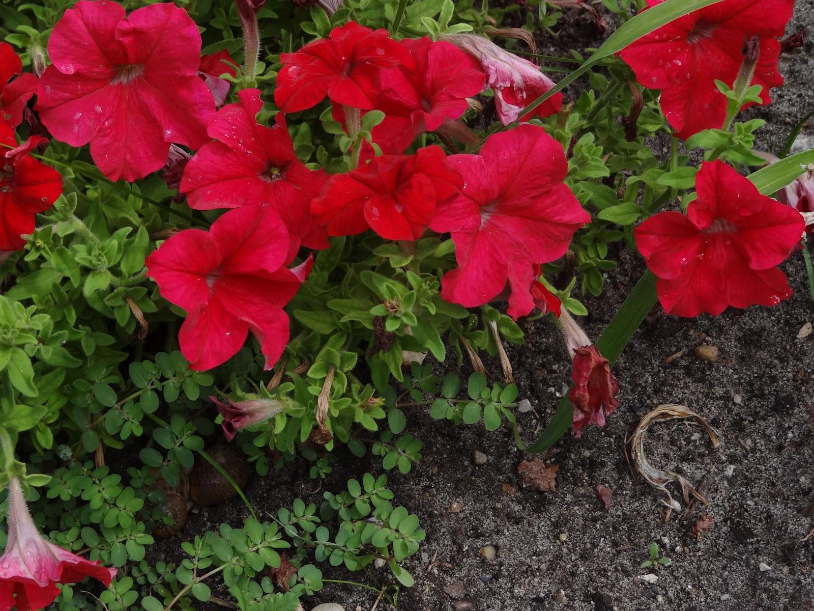 So Yardtistic: Flower Gardening
