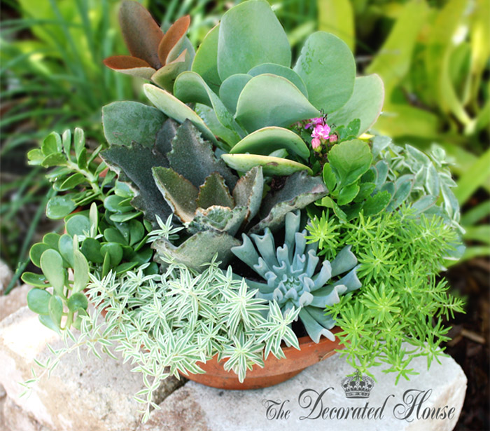 The Decorated House How To Create A Succulent Dish - how to design a succulent garden