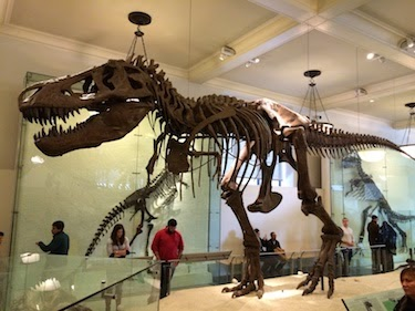 Chuck and Lori's Travel Blog - T-Rex at American Museum of Natural History, New York