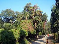 Dhaka Botanical Garden