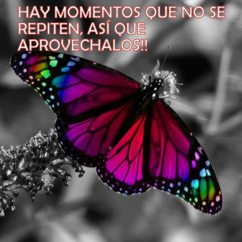 imagenes de mariposas con frases lindas imagui