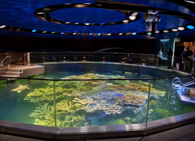 Aquarium news and updates for Oceanic fish tanks