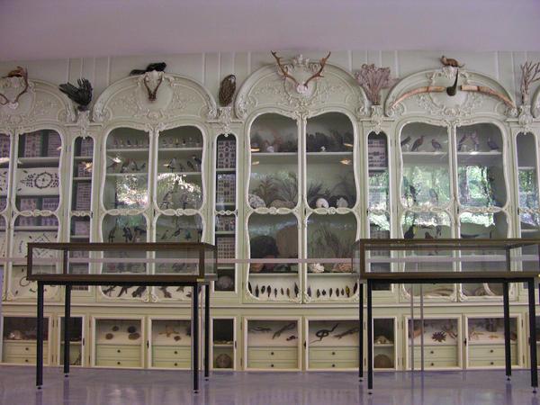Quelques id es pour cr er un cabinet de curiosit for Meuble cabinet de curiosite