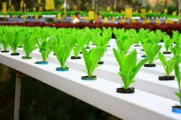 how-to-build-a-hydroponic-system1.jpg