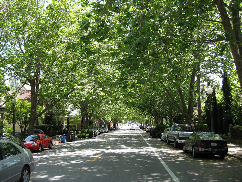 Trees of Santa Cruz County title=