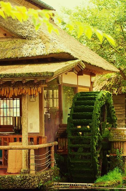 Oshinohakkai, Yamanasshi
