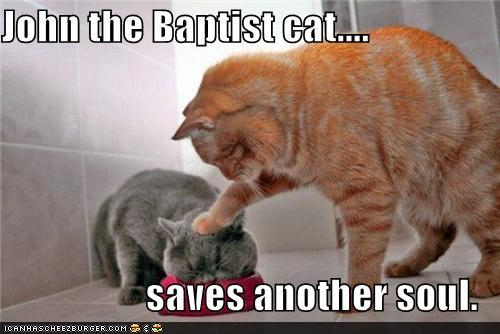 funny pictures john the baptist cat saves another soul meta watershed 8 14 11 8 21 11