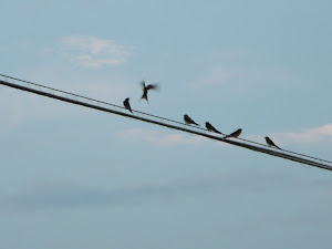 """Birds On a Wire"""